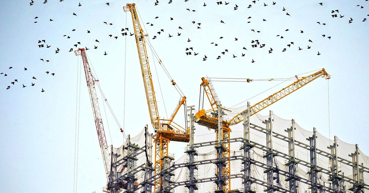 Byggställningar och lyftkranar och flera svarta fåglar som flyger över skyn