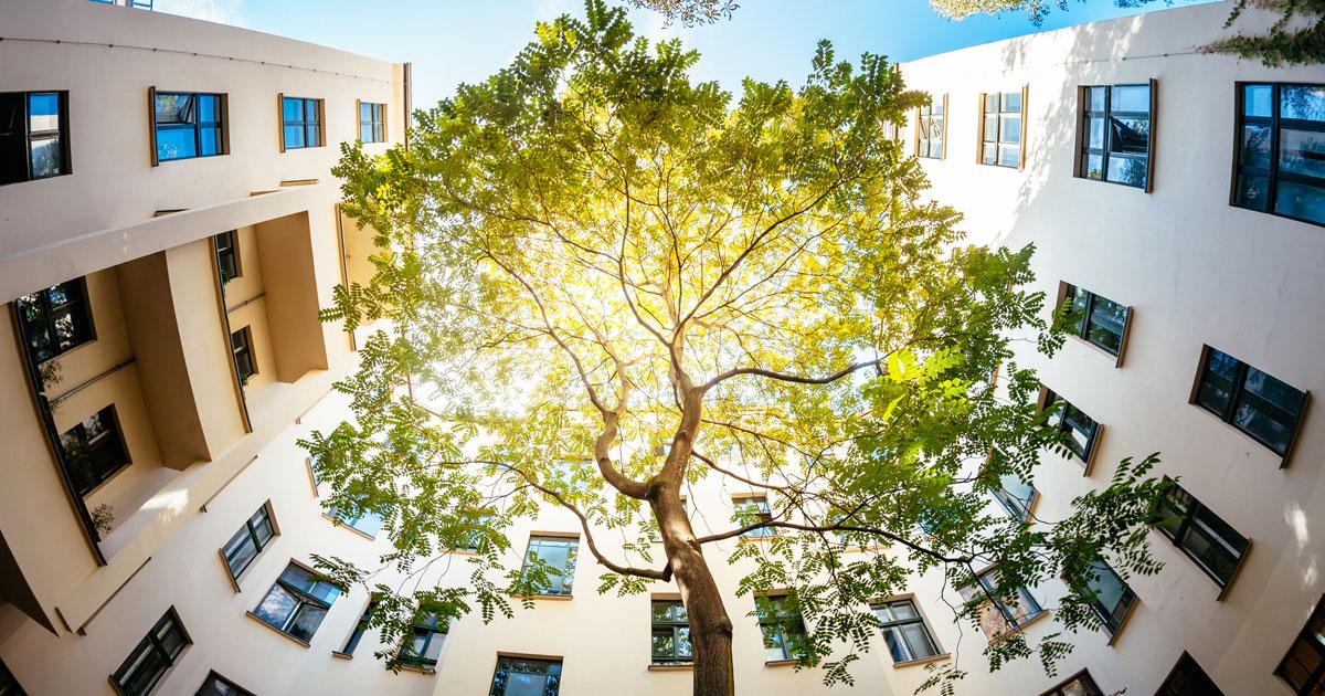Träd som växer i stadsmiljö omgiven av hus